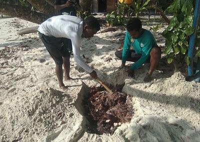 Raja Ampat Marine Park Authority Crown of Thorns Starfish 8