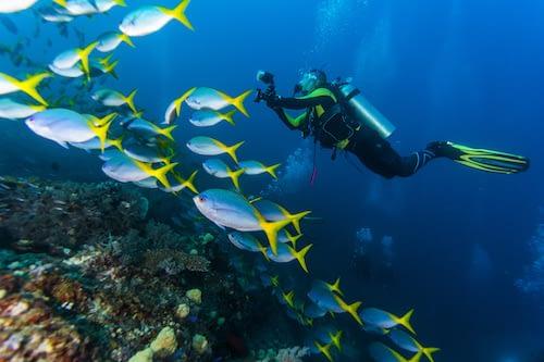 Scuba-Diving-Raja-Ampat-Marine-Park