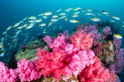 West Waigeo National MPA Raja Ampat Marine Park Wayag