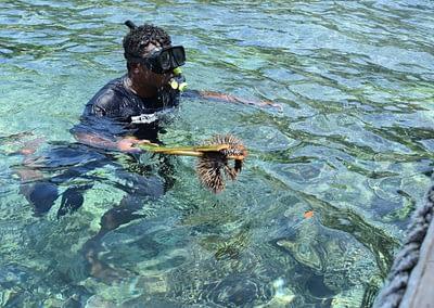Raja Ampat Marine Park Authority Crown of Thorns Starfish 2